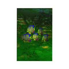 Angel Fish Rectangle Magnet (10 pack)