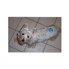 Westie Rectangle Magnet 6