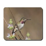 Calliope Hummingbird Mousepad
