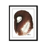 Jacobin Pigeon Framed Panel Print