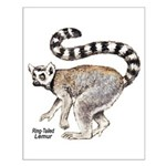 Ring-Tailed Lemur Small Poster