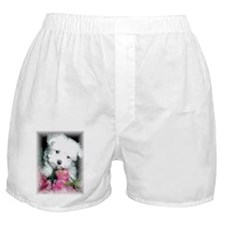 Cool Dog maltese Boxer Shorts