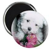 "Unique Maltese art 2.25"" Magnet (10 pack)"