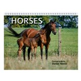 Horses Wall Calendar