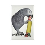 Busy Bird Rectangle Magnet (10 pack)