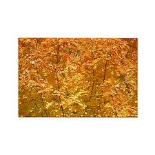 Fall Leaves Rectangle Magnet
