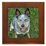 Blue Heeler Framed Tile