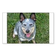 Blue Heeler Rectangle Decal