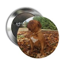 "Cute Dogue de bordeaux 2.25"" Button"
