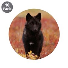 "Autumn Wolf 3.5"" Button (10 pack)"