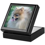 Pomeranian Keepsake Box