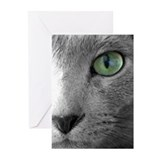 Russian blue cat 10 Pack