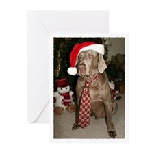 Season's Greetings Greeting Cards (Pk of 20)
