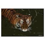 Bengal Tiger 35