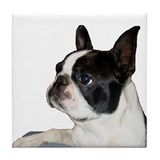 Boston Terrier - Pleading Eye Tile Coaster