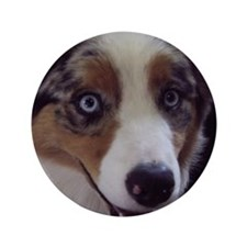 "Cute Blue merle 3.5"" Button"