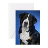 Funny Swissy Greeting Cards (Pk of 20)