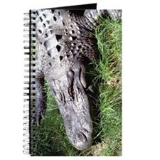 Alligator Head Journal