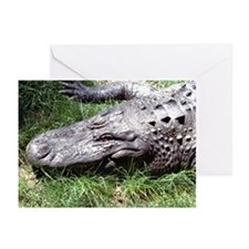Alligator Head Greeting Cards (Pk of 10)
