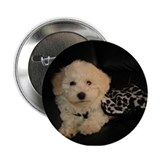 Bichon Love Button