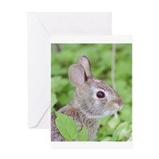 Baby Cottontail Greeting Card
