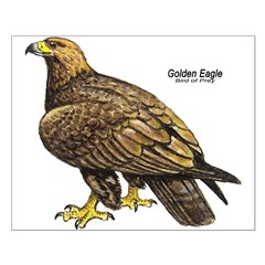 Golden Eagle Bird Posters