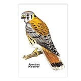 American Kestrel Bird Postcards (Package of 8)