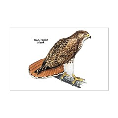 Red-Tailed Hawk Bird Posters