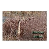 American Bittern Postcards (Package of 8)