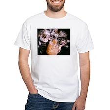American Curl Kittens Shirt