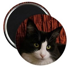 "B&W Maine Coon Cat says Hello! 2.25"" Magnet (10 pa"