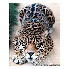 Jaguar Small Poster