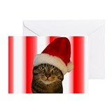 Funny Tabby cat Greeting Card