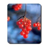 Mousepad:  Highbush Cranberries