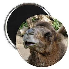 Helaine's Camel Magnet