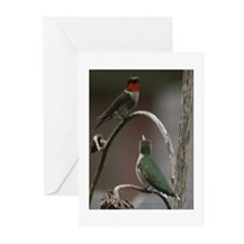 Cute Hummingbird photographs Greeting Cards (Pk of 10)