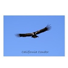California Condor Postcards (Package of 8)