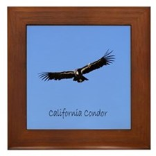 California Condor Framed Tile