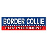 BORDER COLLIE Bumper Bumper Stickers