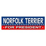 NORFOLK TERRIER Bumper Car Sticker