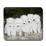 Samoyed Puppies #2 Mousepad