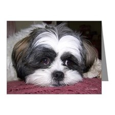 Cute Shih Tzu Dog Note Cards (Pk of 10)