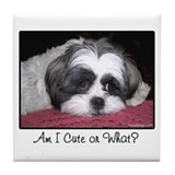 Cute Shih Tzu Dog Tile Coaster