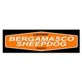 BERGAMASCO SHEEPDOG Bumper Bumper Stickers