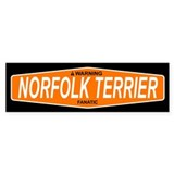 NORFOLK TERRIER Bumper Bumper Stickers