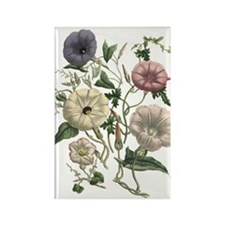 Morning Glory Art Rectangle Magnet