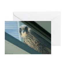E-401 Esperanza Greeting Cards (Pk of 10)