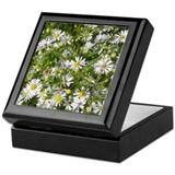 Frost Asters Keepsake Box