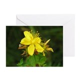 St. Johnswort Greeting Cards (Pk of 10)