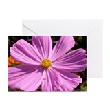 Cosmos Greeting Cards (Pk of 10)